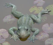 floating frog-web.jpg