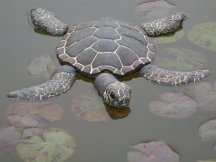 floating turtle-web.jpg